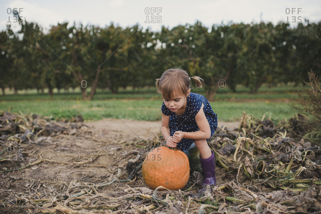 Girl trying to pick up a pumpkin at a pumpkin patch