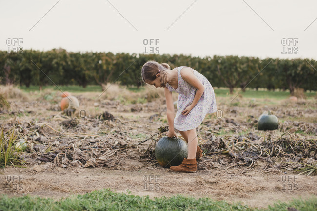 Girl attempting to pick up a large pumpkin at a farm