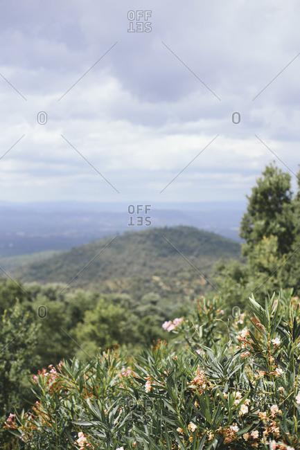Verdant rolling hills in rural landscape