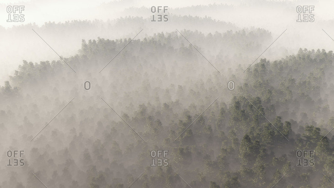Aerial of pine forest in mist