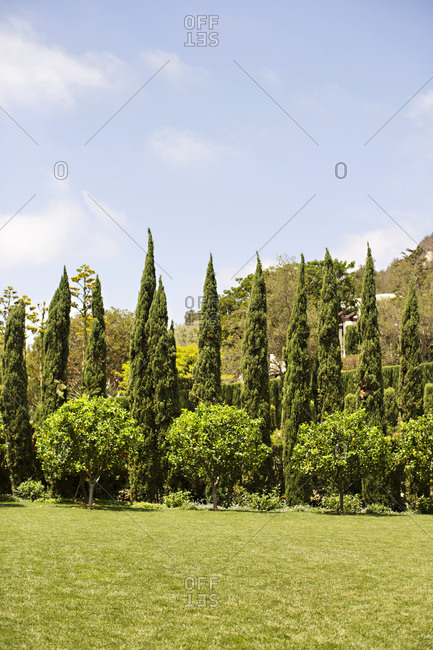 Perfectly landscaped yard with trees and shrubs