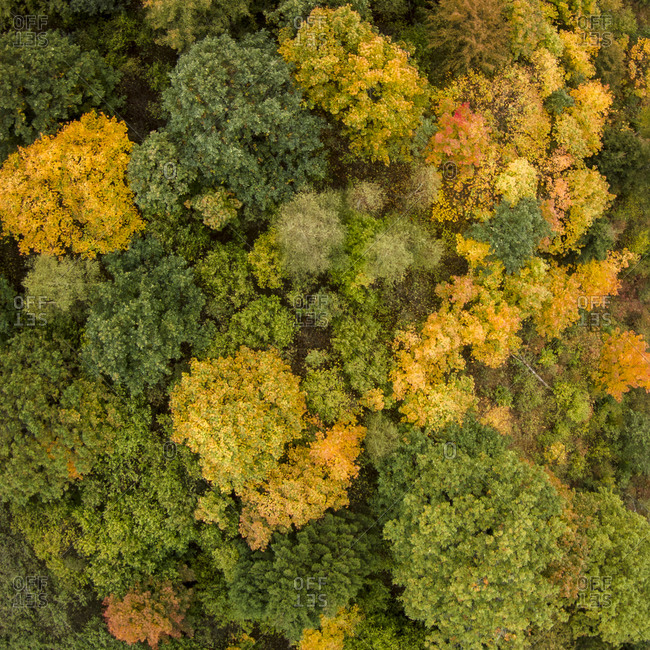Aerial view of color changing trees in Lithuania