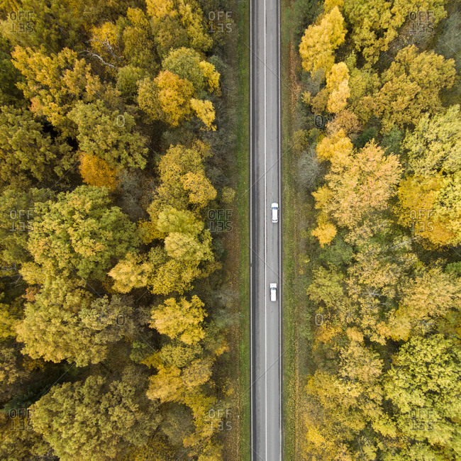 Aerial view road in forest of color changing trees in Lithuania