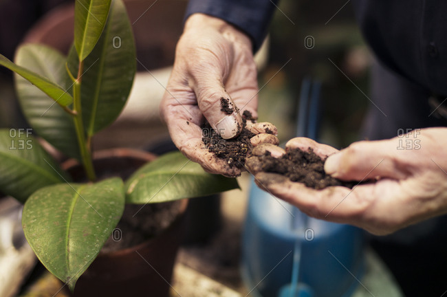Man examining texture of soil while potting a plant in garden