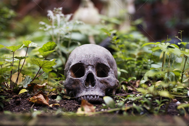 Human skull sculpture resting in garden bed stock photo - OFFSET