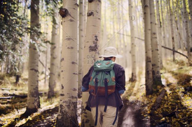 Back view of hiker walking through aspen forest