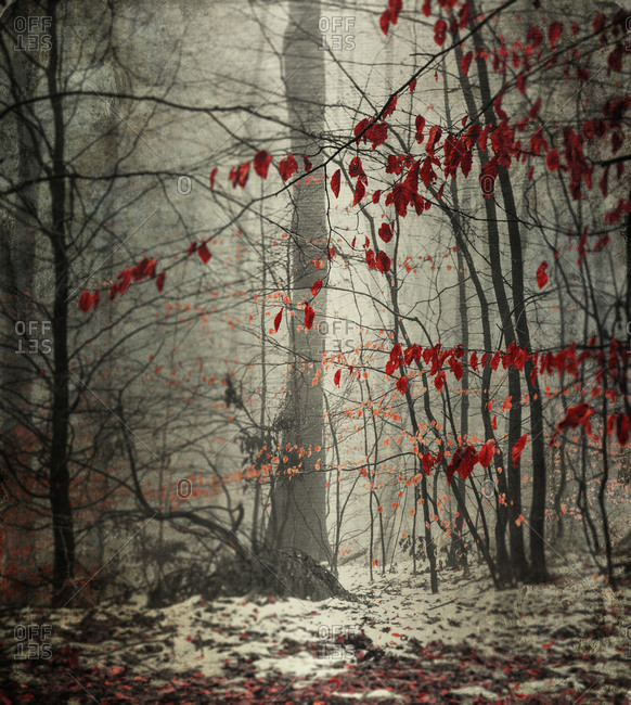 Winter forest with last leaves