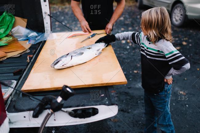 Boy helping fillet fish