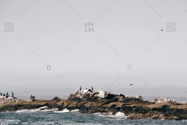 Coastal birds gathered on ocean rocks