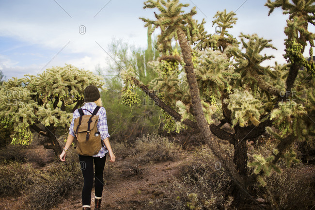 Rear view of blonde girl hiking by cholla cactus trees