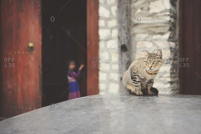 Cat staring off in Turkish street