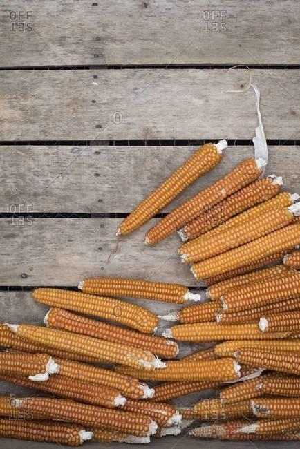 Shucked ears of corn