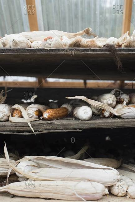 Corn drying on shelves at a farm