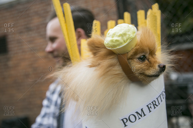 25th Annual Halloween Pet Parade in New York City's Tompkins Square Park
