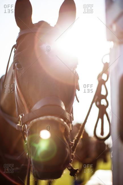 Bridled horse's face in sunlight