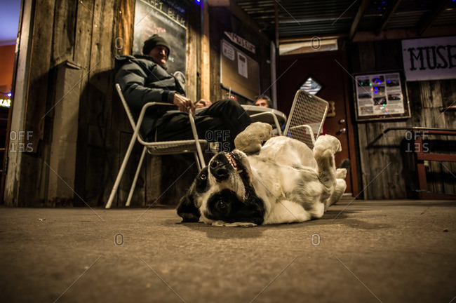 Madrid, New Mexico, USA - January 19, 2015: Funny dog inside a bar in Madrid, New Mexico