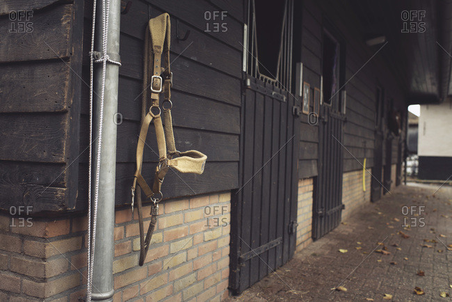 Bridle hanging on the wall of a barn