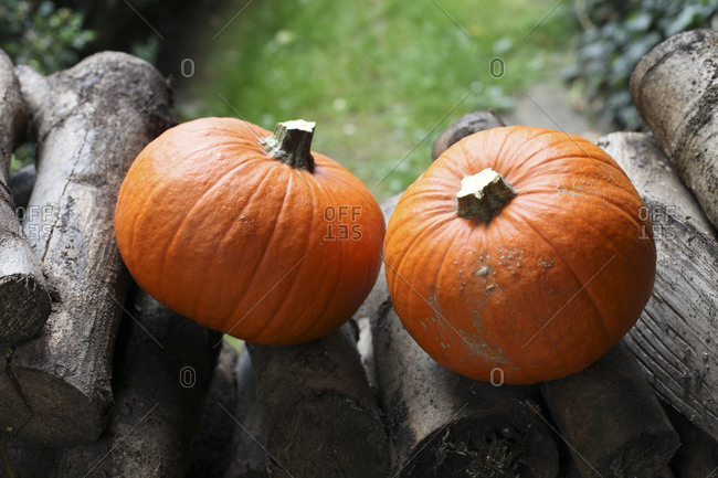 Two pumpkins on a wood pile