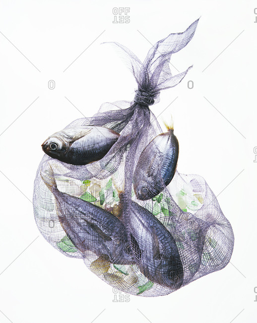 Four fish in a net