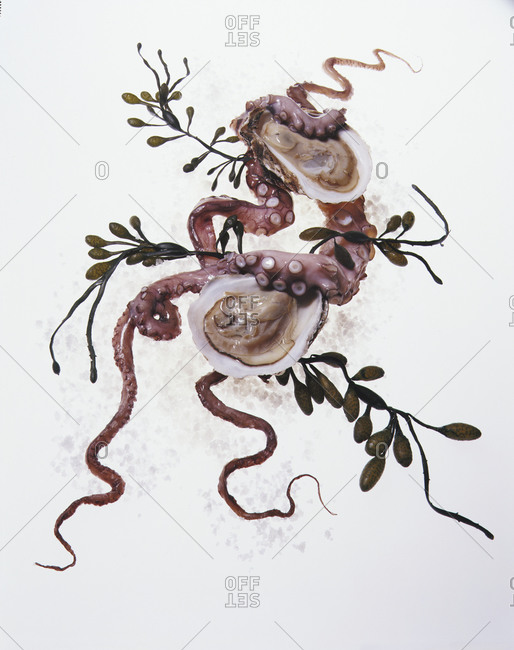 Squid and clams on a white background