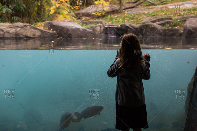 Bronx, NY, USA - November 2, 2015: Little girl looking at fish aquarium at the Bronx Zoo
