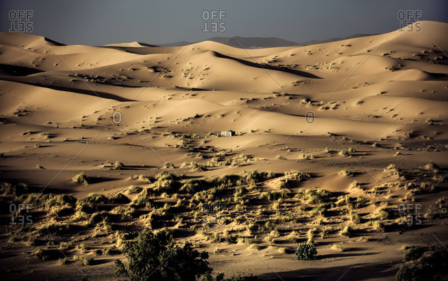 Sparse vegetation and a building in the Moroccan sand dunes