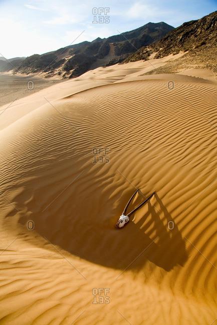 Skull in sand dunes in the Namibian desert