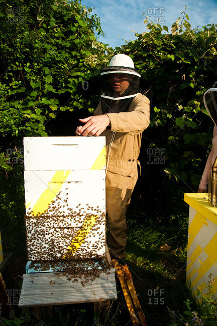 Beekeeper lifting honeycomb frame out of a beehive