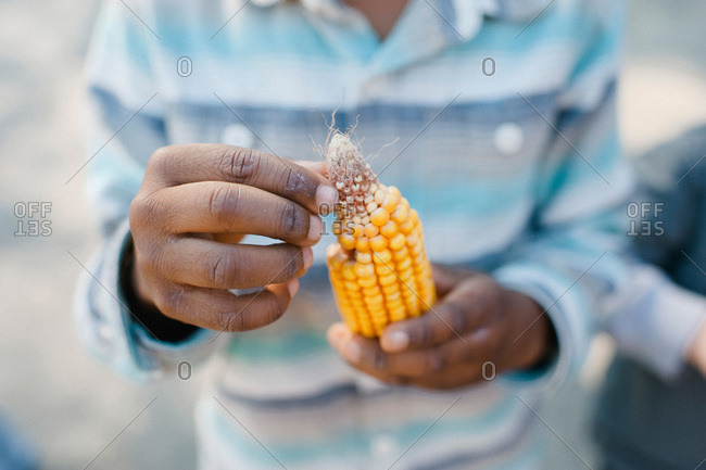 Person picking kernels off an ear of corn