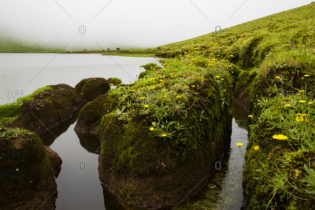 Detail of the edge of the lagoon of Caldeirao, Corvo Island, Azores, Portugal