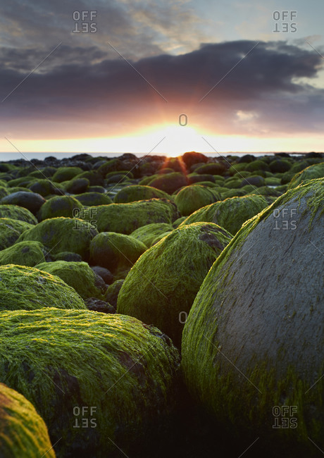 Sunset over mossy rocks, Iceland