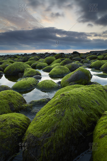 Sunset over mossy stones, Iceland