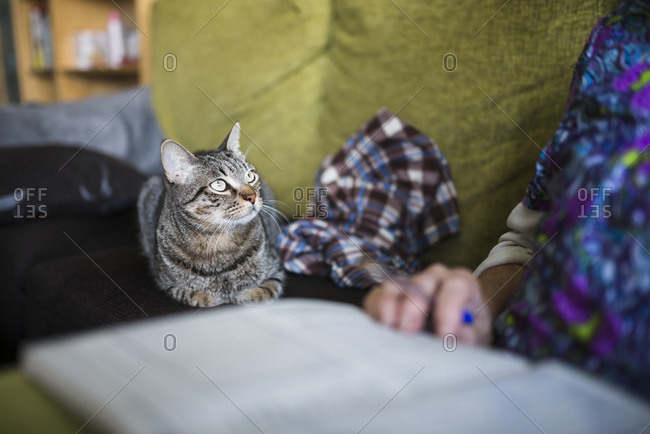 Tabby cat lying on the couch looking to its owner