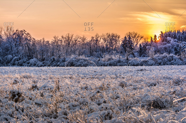 Corn field after a snowstorm in Ontario, Canada