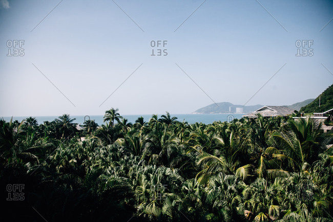 Overlooking palm trees in a tropical coastal landscape