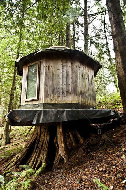 Sedro-Woolley, Washington - November 16, 2012: Small house built on old growth cedar stump by SunRay Kelley