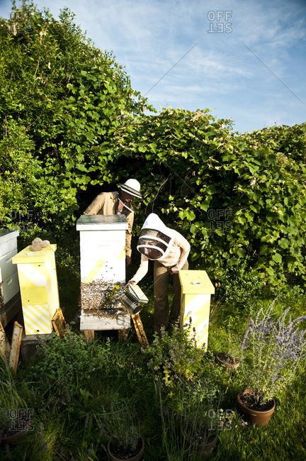 Beehives filled with bees