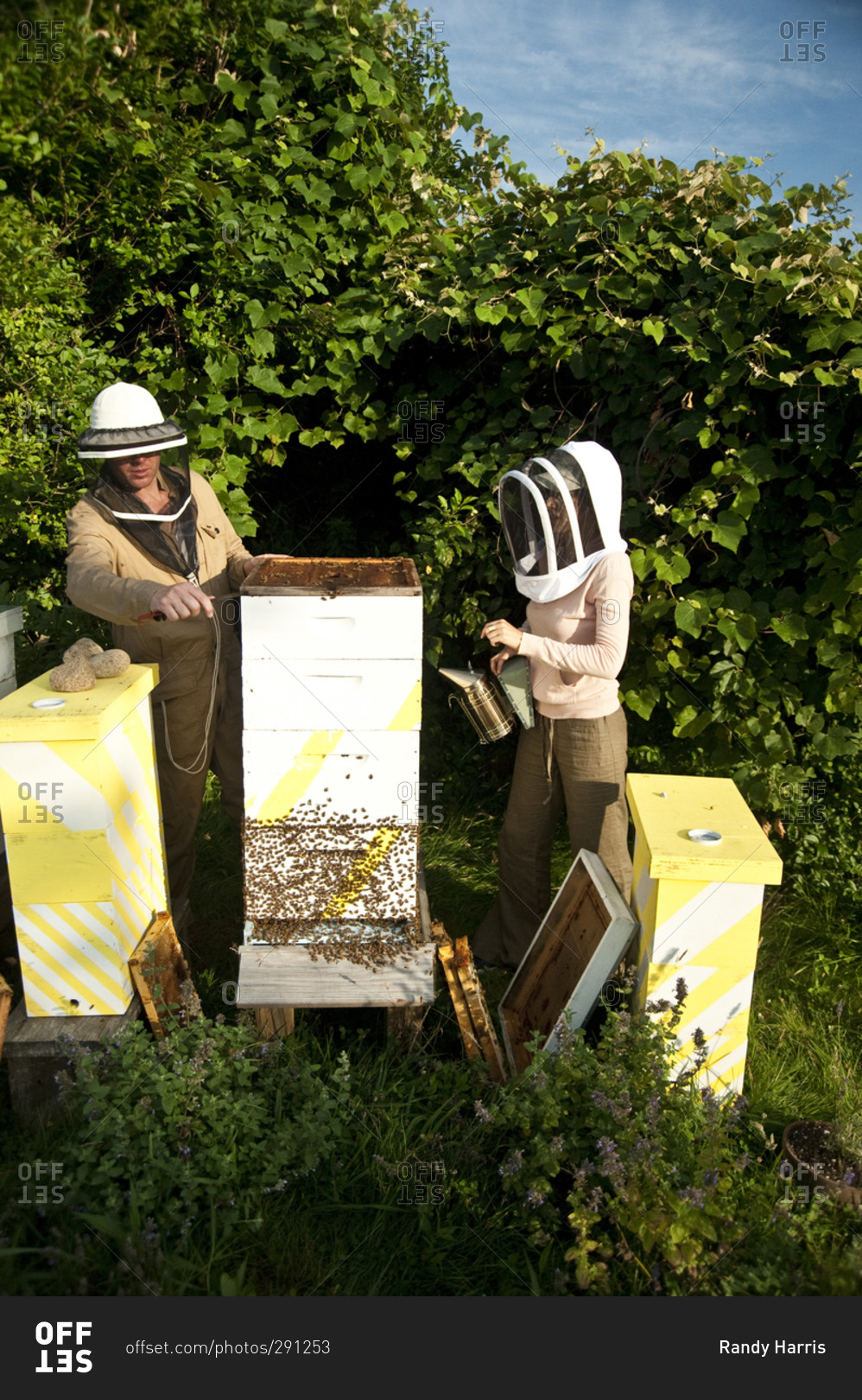 Montauk, New York - July 23, 2011: Beekeeping at Surf Shack which ...