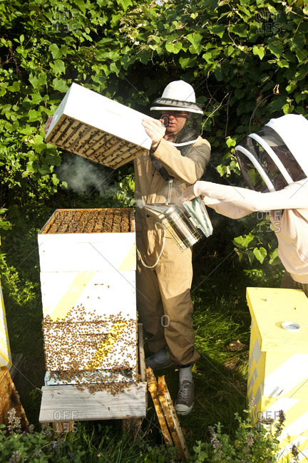 Montauk, New York - July 23, 2011: Chandelier Creative founder Richard Christiansen with beehives at Surf Shack