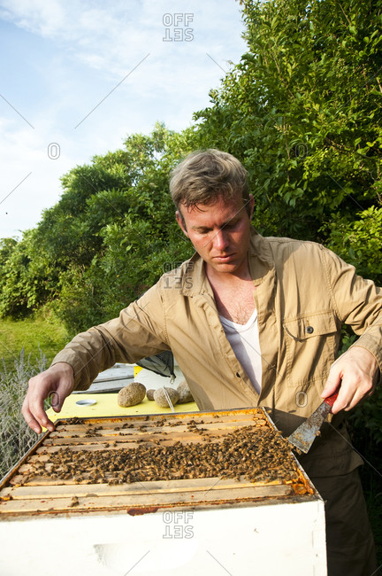 Montauk, New York - July 23, 2011: Bees on a hive at Surf Shack which Chandelier Creative founder Richard Christiansen created for employees