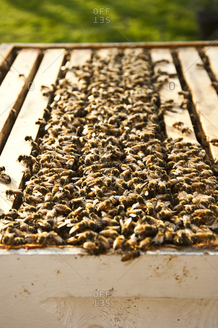 Close up of a beehive
