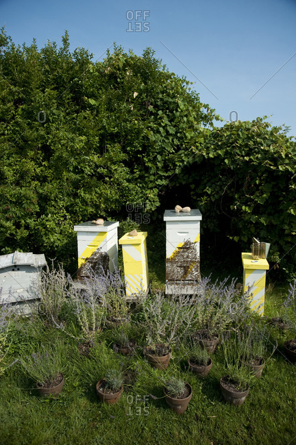 Beehives and potted plants