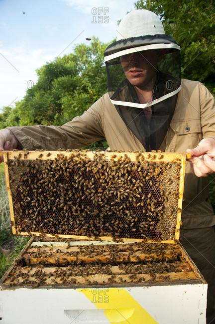 Montauk, New York - July 23, 2011: Richard Christiansen, founder of Chandelier Creative, taking care of the Surf Shack beehives