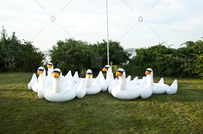 Swan floats