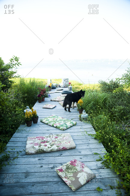 Cushions and dog on a dock