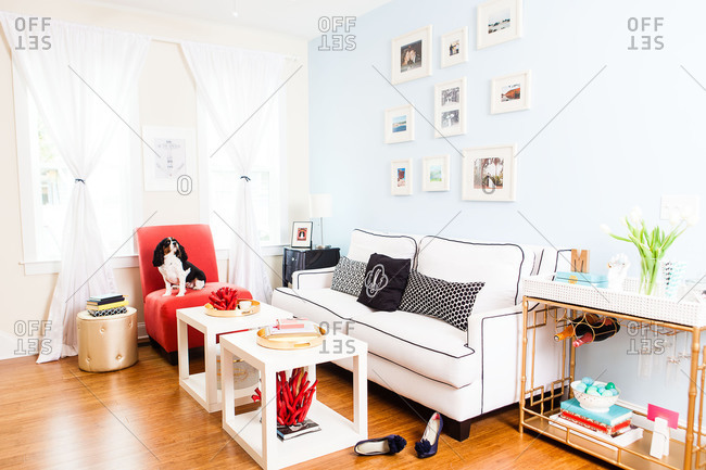 Interior of a stylish room with a dog