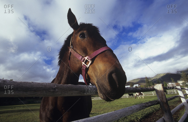 Brown horse standing on fence at farm