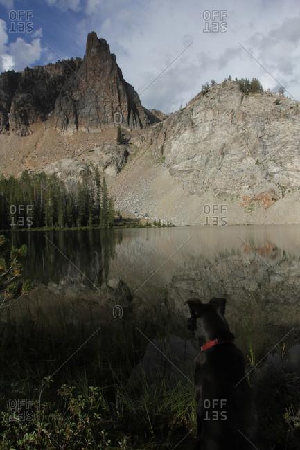 Black dog overlooking sharp mountain peak at lake