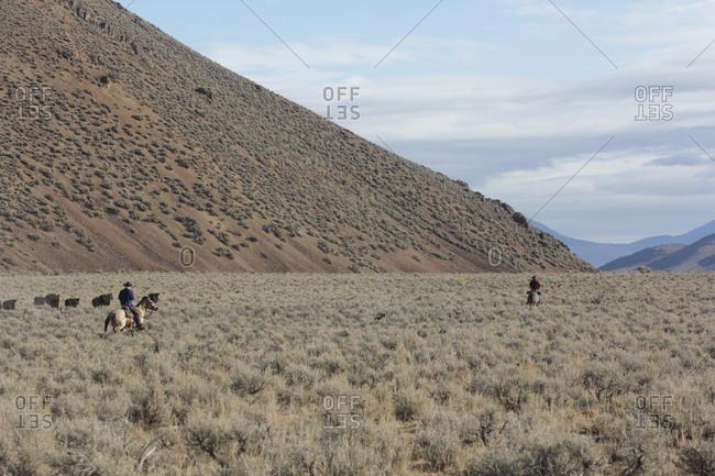 Cowboys on horseback with cattle in desert mountain landscape