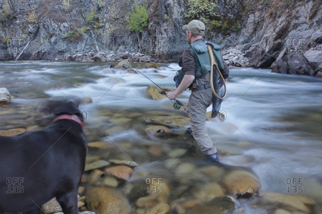 Fisherman wading in river with dog on riverbank
